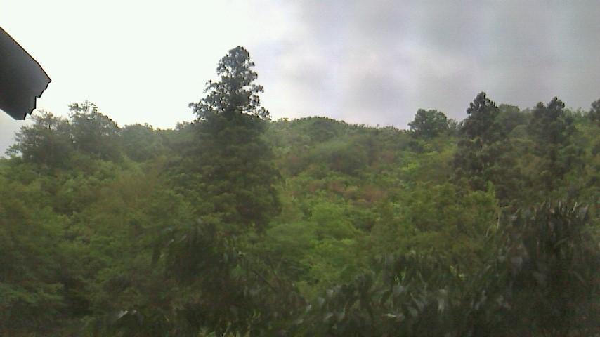 6月は、窓からは一面緑の光景。