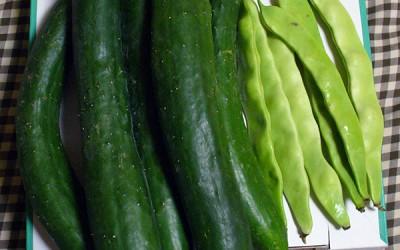 「野菜」と呼ばれる生きものたちとともに ~摺渕温泉・山十旅館