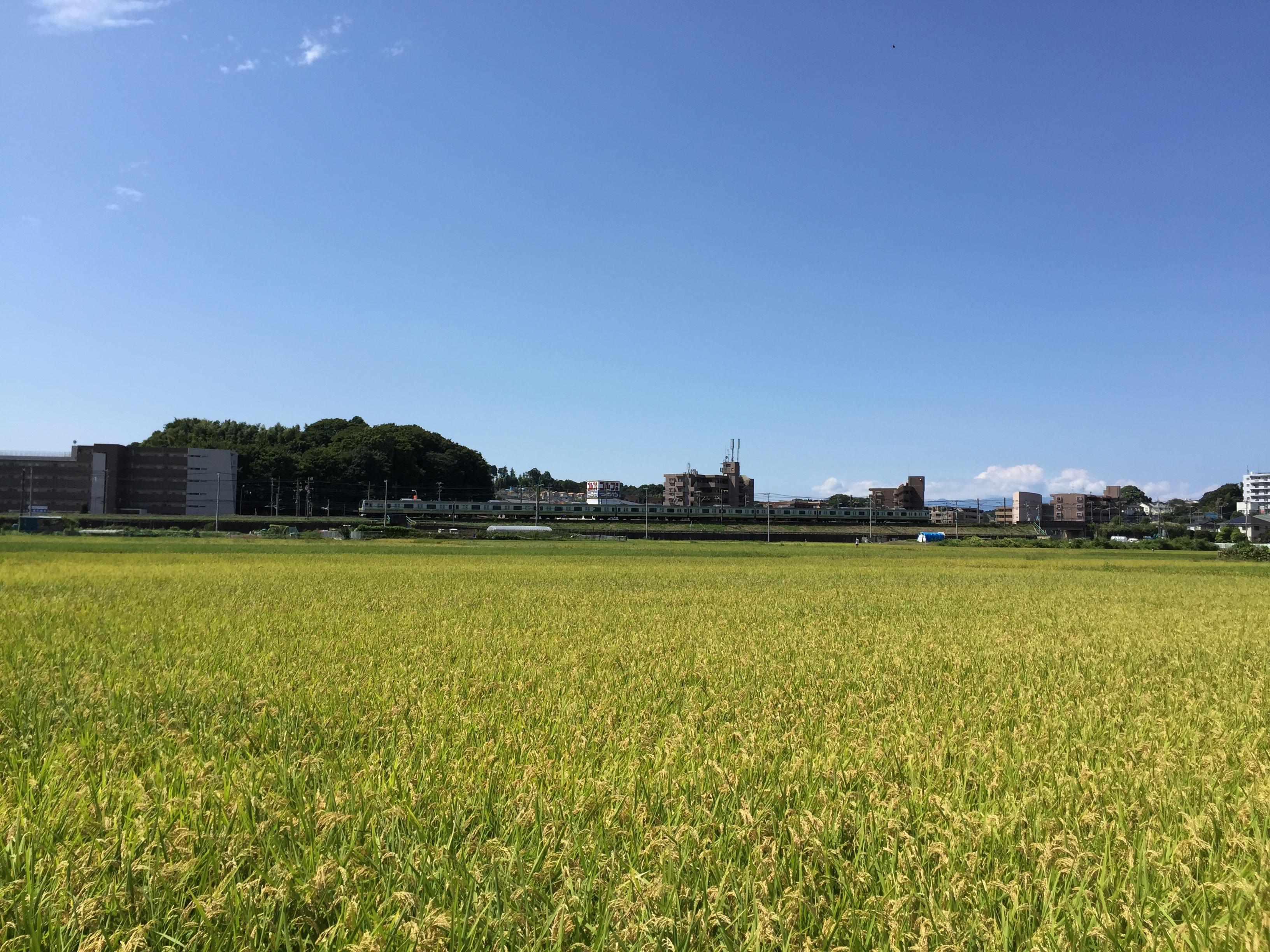 田んぼの向こうを走るのはJR横浜線