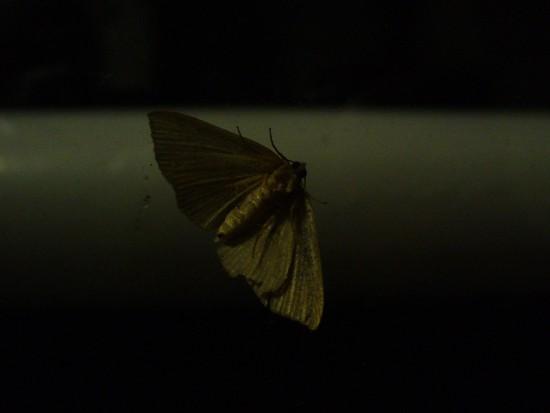 oyutoikimono_005_021