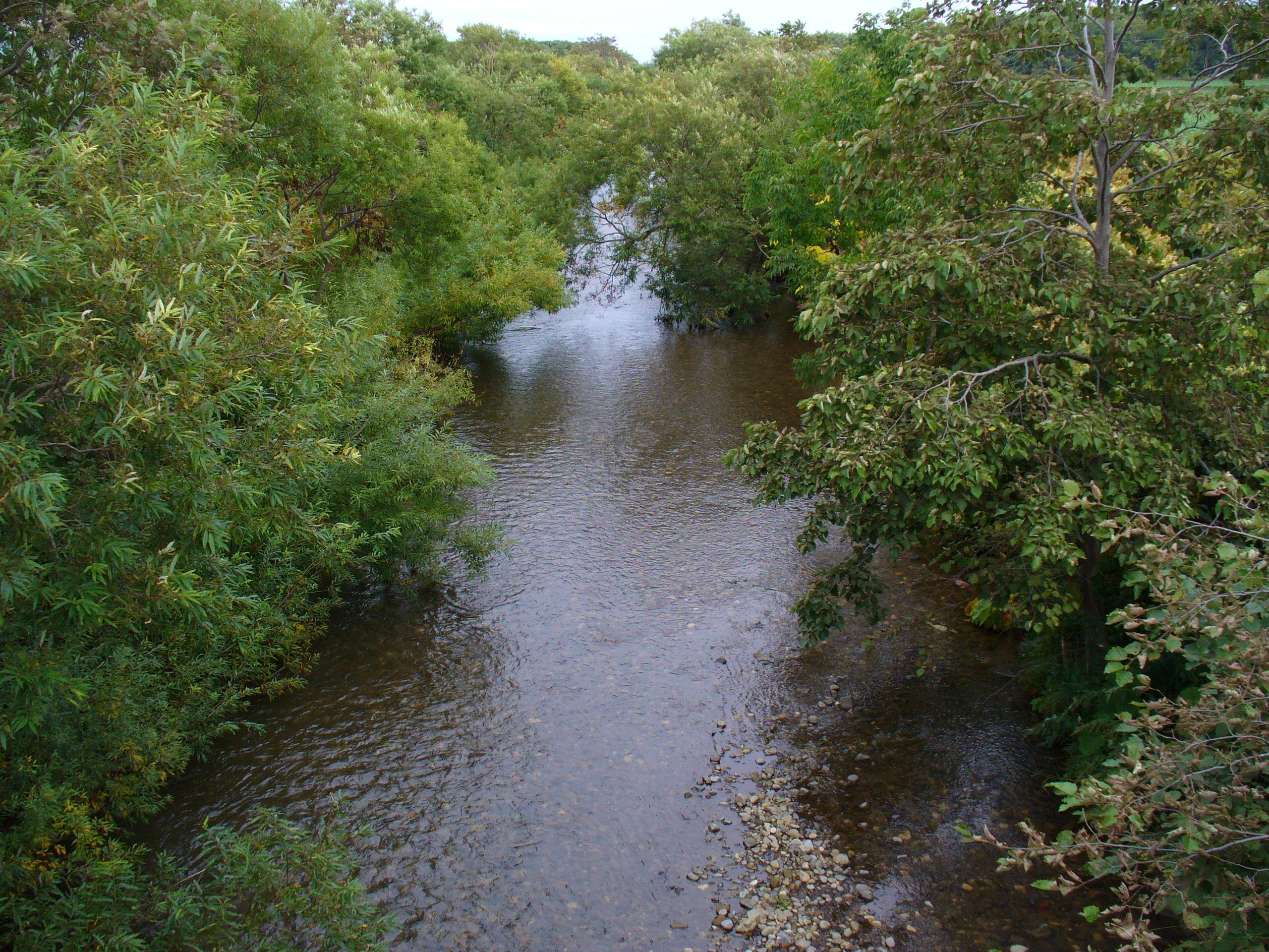名前もわからない小さな川。ここでもサケが見られました。