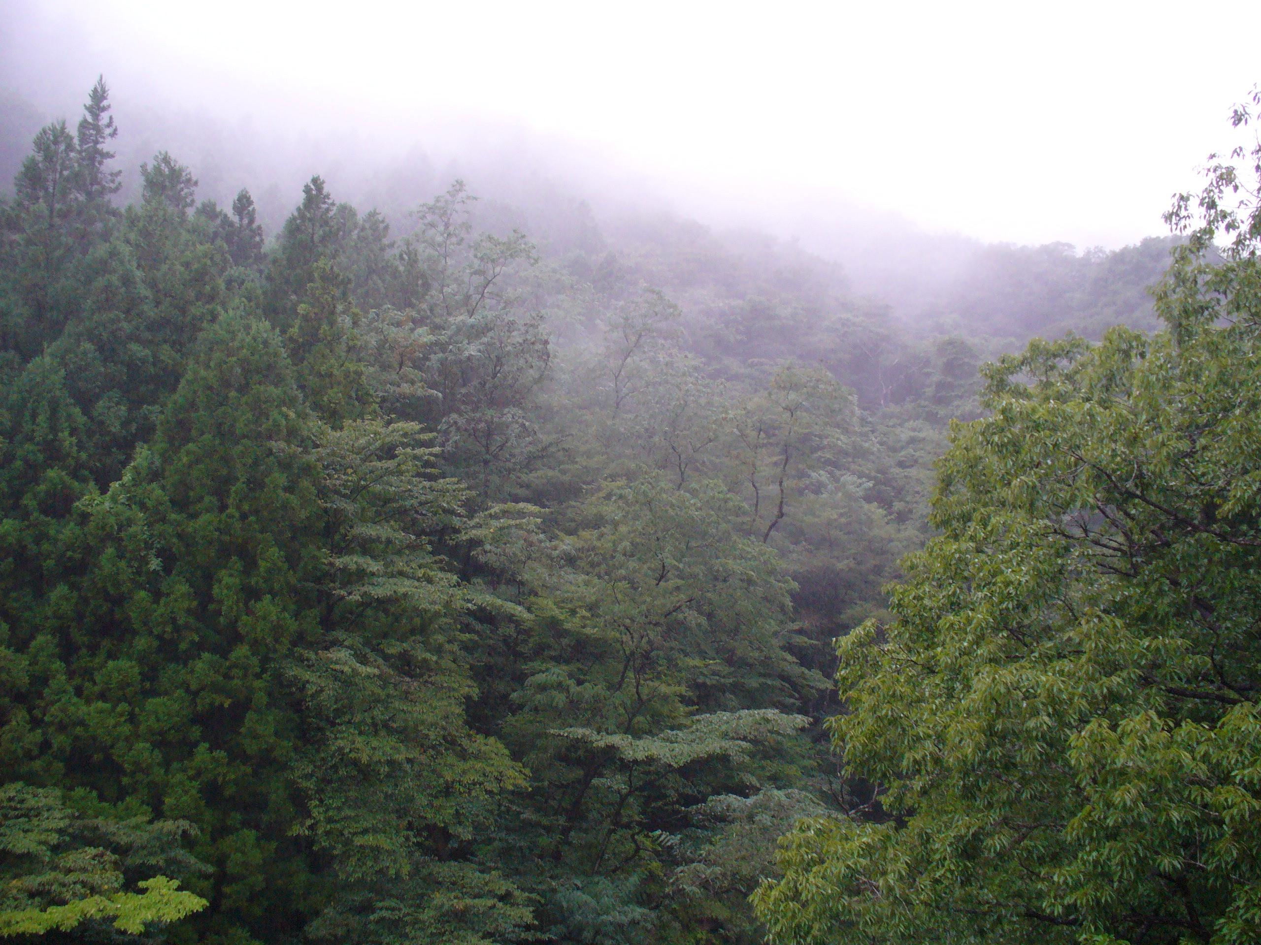 雨の赤城山中腹