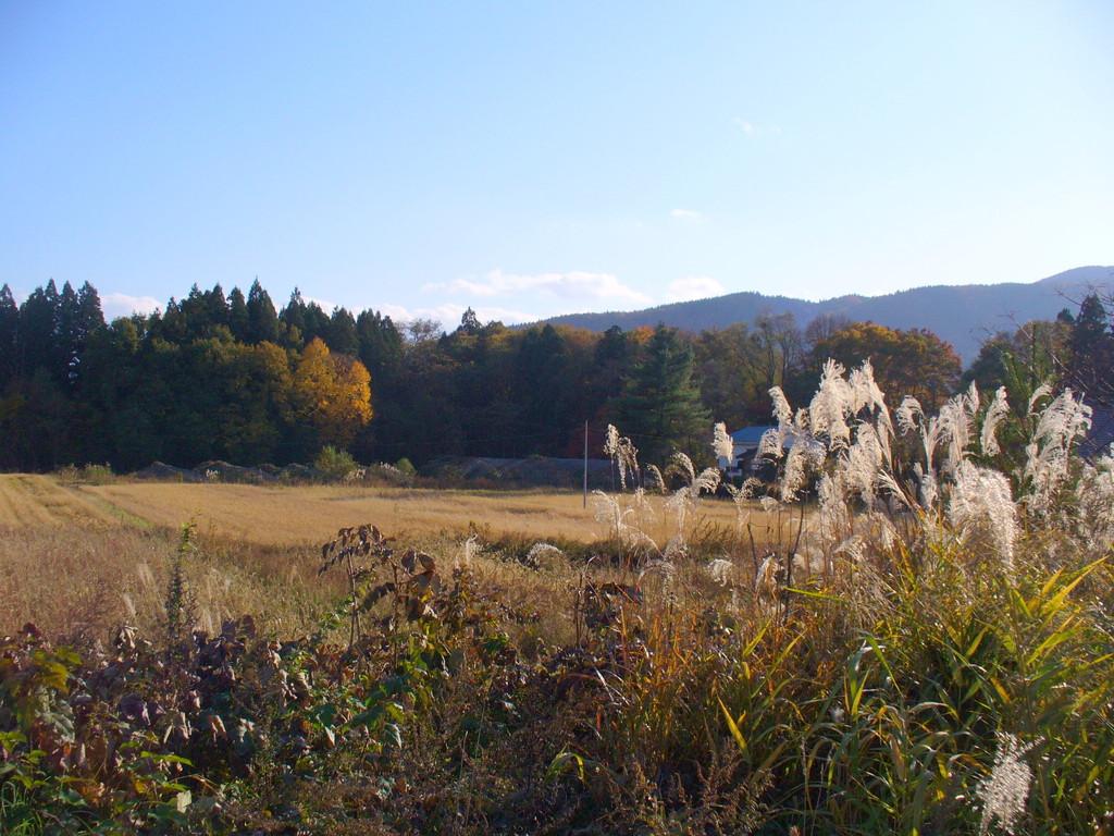 東北の、なんでもない秋の1日……の光景♪