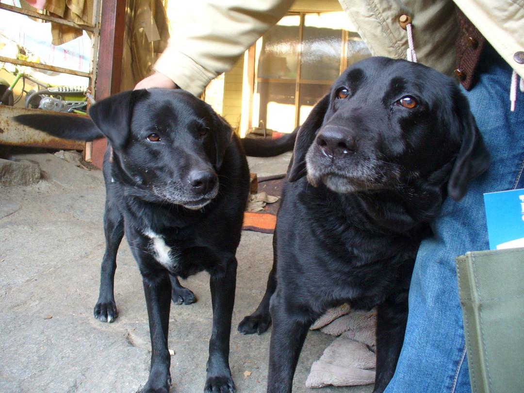 コロさんに甘える、保護犬のらんさん(右)と、その娘のさくらさん(左)。