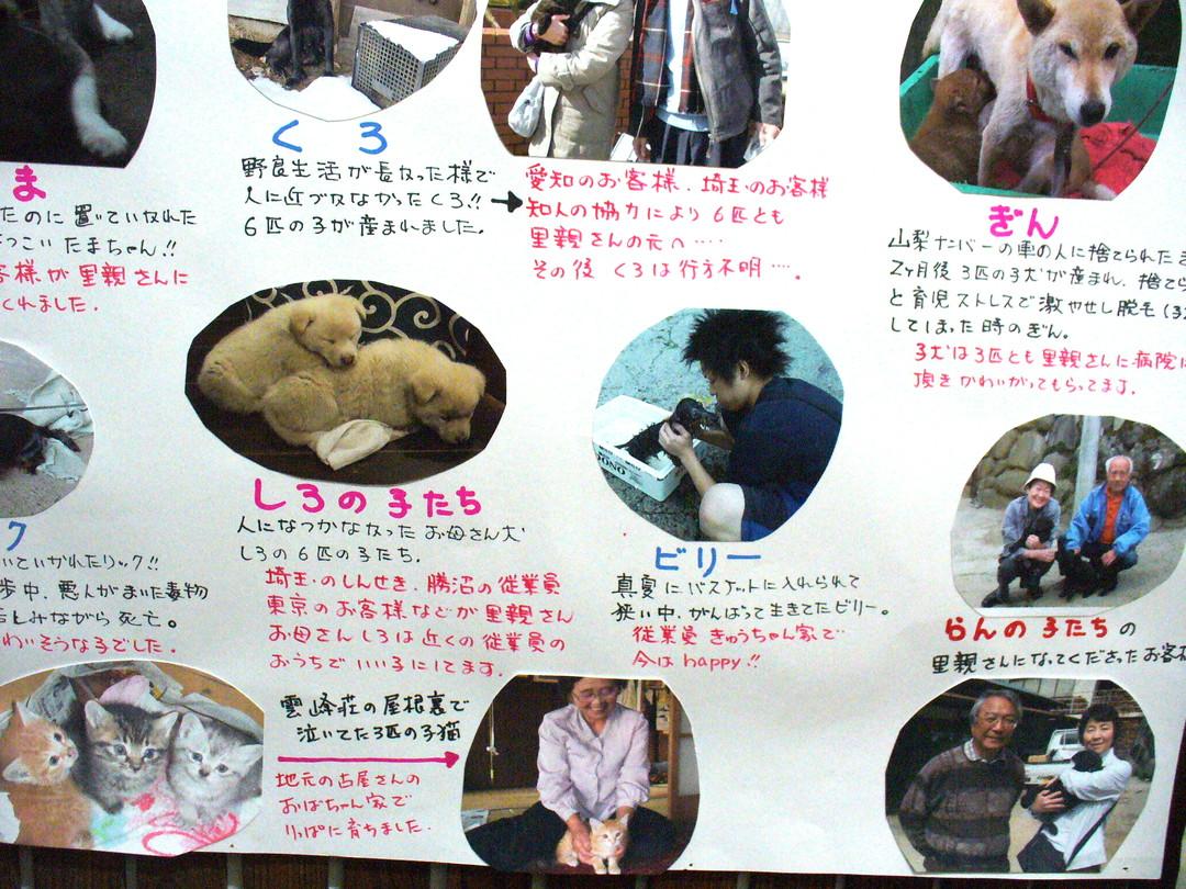 雲峰荘さんが救った犬猫たちの一部。ほかにも多くの捨てられた犬たちをレスキューし、里親さんを探されてきました。