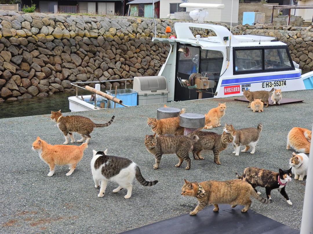 青島港に着くと……