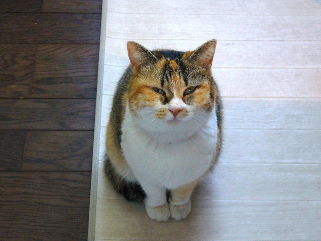 事務所スペースに現れた、こごめさん。ガラスごしに、じいっとご対面♪ 美猫さんです。