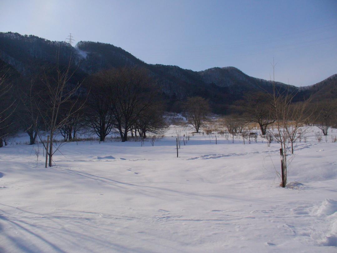 一面のまぶしい雪の地を林道から眺める。