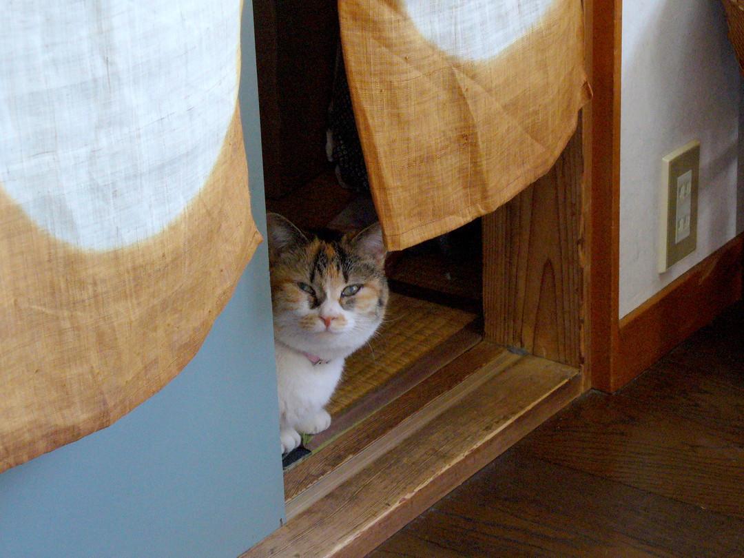 事務所の隣から……そっと顔をのぞかせる、こごめさん♪