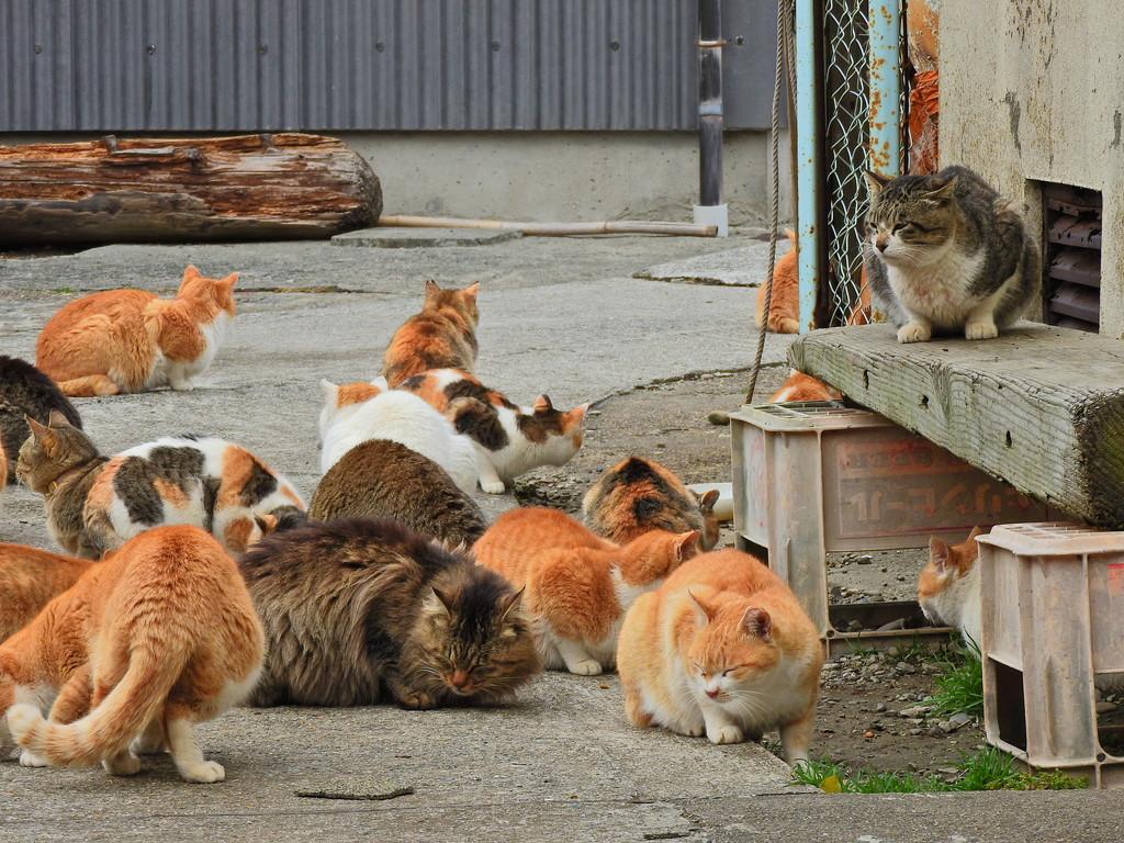 エサやり場に集う猫