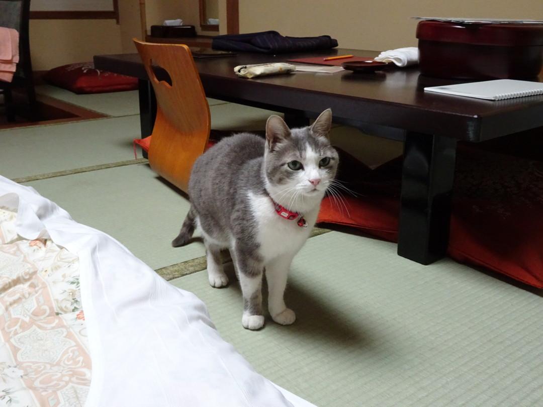 お部屋に現れた、きれいな猫さん……。