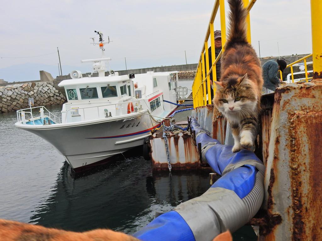 定期船から延びる送水ホース