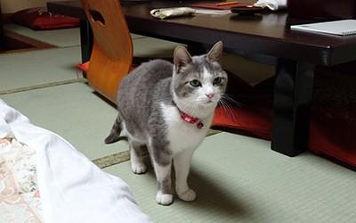春の里山・柔らかな猫と花に寄り添う♪ ~鎌先温泉・木村屋旅館