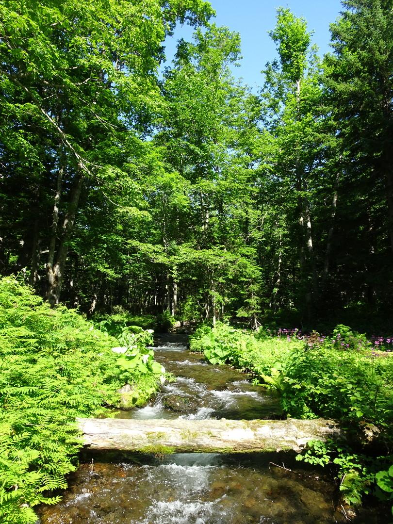 植物の香りが満ちる、清涼なノンノの森♪