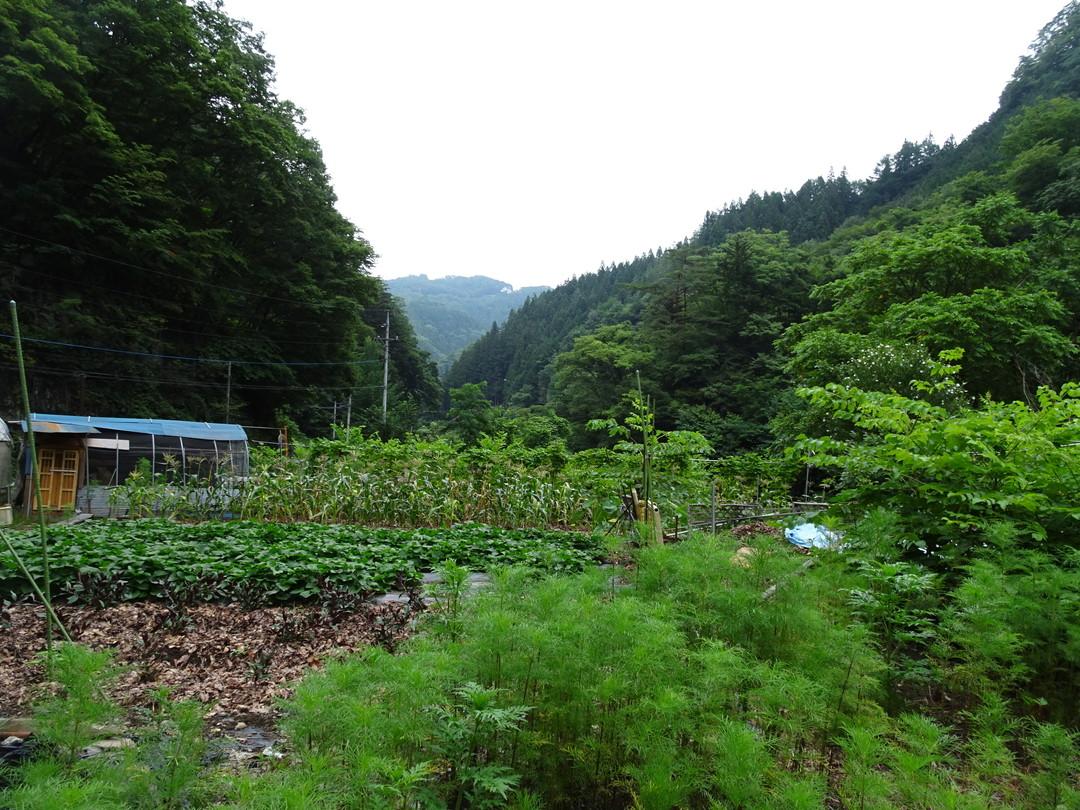 すりばち荘の横にある畑です。