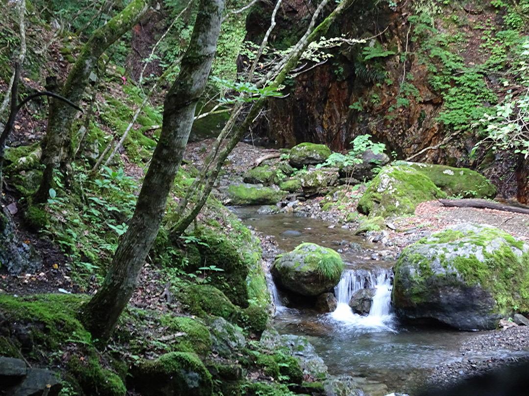アオバト飛来スポットの近く。神秘的な渓流と森。