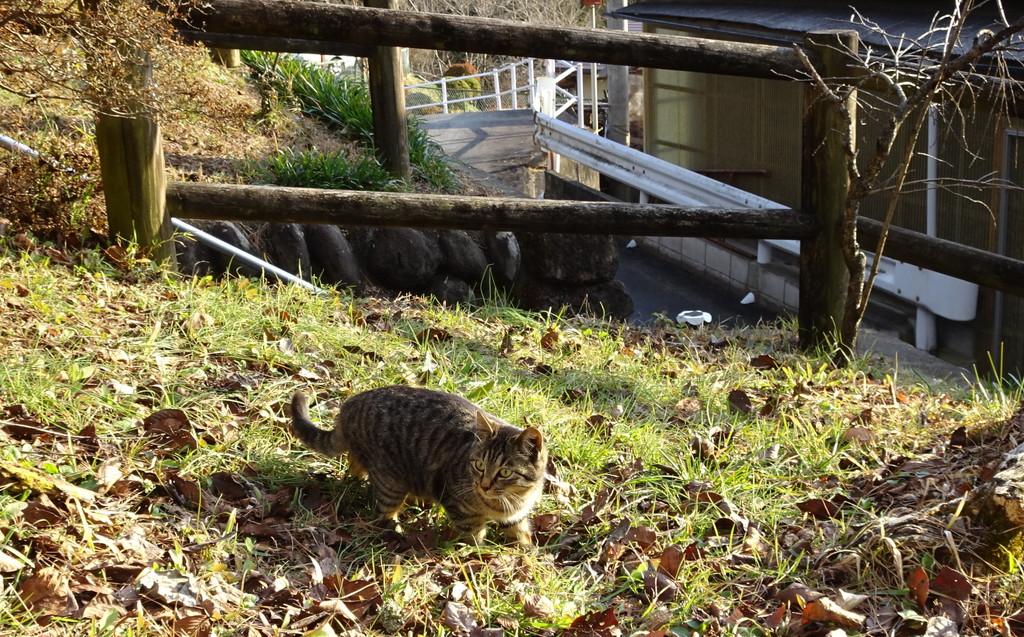 こぶりで可愛らしいキジトラねこさん。好奇心旺盛♪