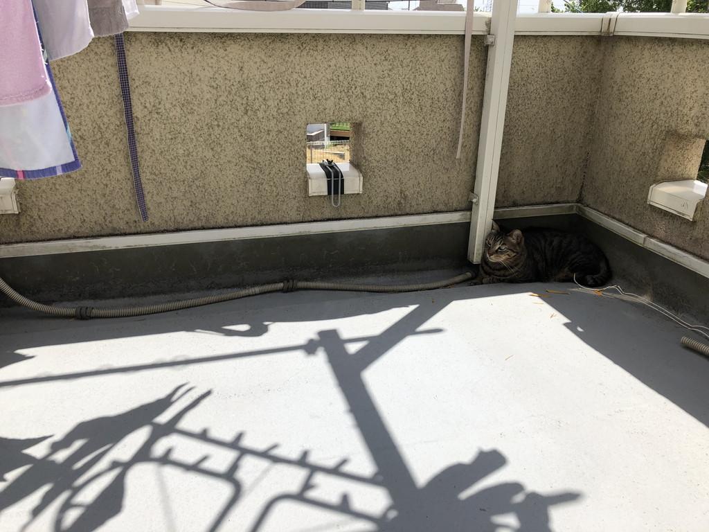 風と戯れる我が家の猫「ひじき」