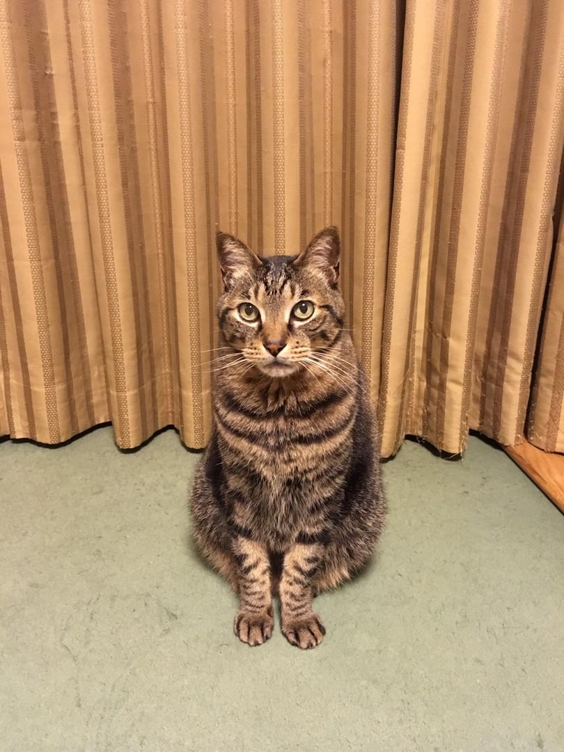 ときどき飼い猫「ひじき」の表情にどきりとさせられる。それは人間の言葉にも勝る。