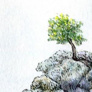 石のうえに木が生えてたの